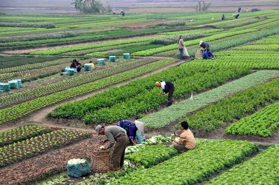 Hướng đi bền vững cho người nông dân trong bối cảnh hội nhập