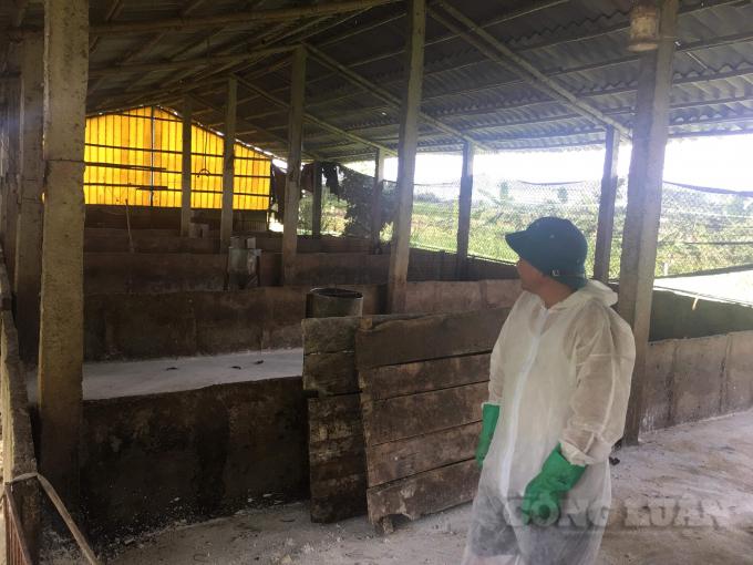 Phú Thọ: Quyết liệt phòng chống dịch tả lợn châu Phi