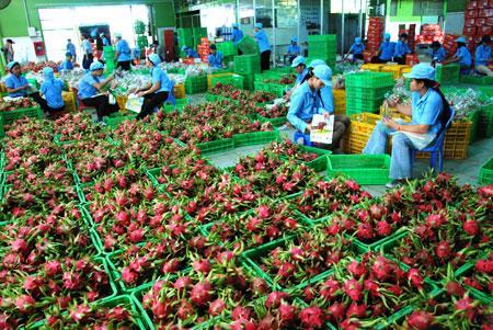 Xuất khẩu rau quả ước đạt 1,83 tỷ USD