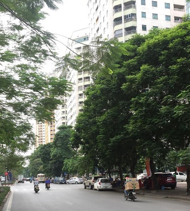 Vì sao công tác bảo vệ cây xanh đô thị còn khó khăn