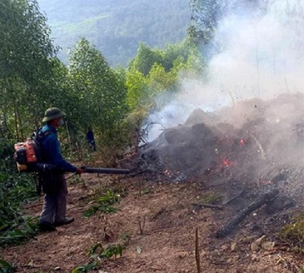 Nghệ An: Khoảng 15ha rừng thông 15 tuổi bị lửa thiêu rụi