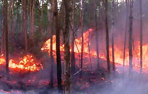 Phú Yên: Xử lý nghiêm các hành vi gây cháy rừng