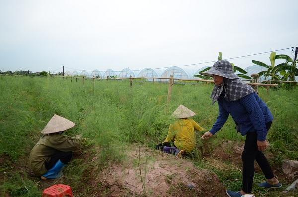 Nông dân làm giàu từ nông nghiệp công nghệ cao