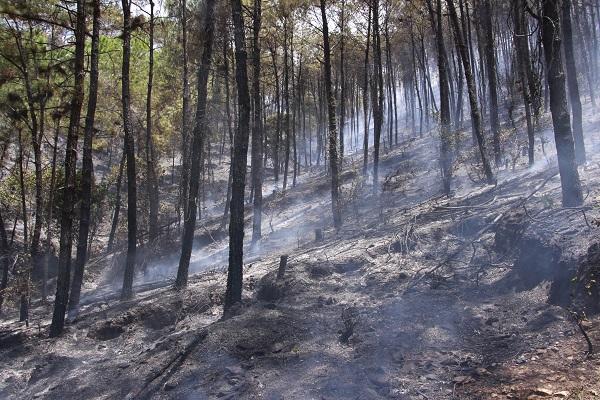 Sáng cứu 5 người khỏi vụ cháy nhà, trưa khống chế vụ cháy rừng thông hàng chục năm tuổi