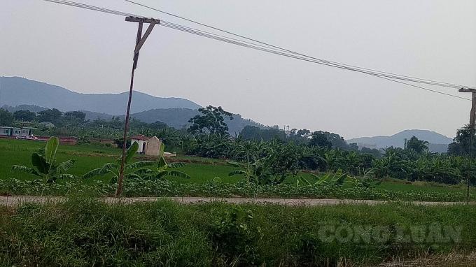 Đường điện hạ thế từ máy hạ áp về xóm 7 do Điện lực Kinh Môn xây dựng đã lâu, bị xuống cấp, người dân tự gia cố bằng những cột gỗ đơn sơ.