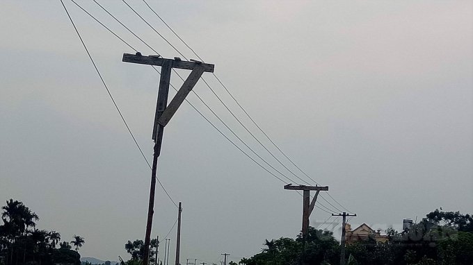 Cột gỗ đỡ dây trần không có sứ cách điện tại xóm 7, Bạch Đằng, Kinh Môn