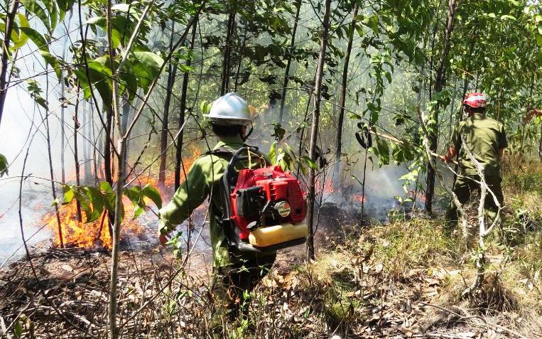 Cháy 20 ha rừng trồng của người dân tại Thừa Thiên - Huế - Ảnh 1