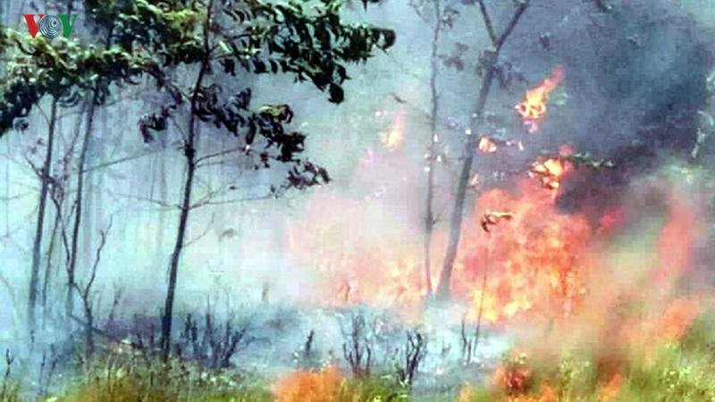 Cháy 20 ha rừng trồng của người dân tại Thừa Thiên - Huế - Ảnh 2