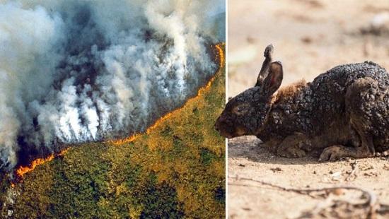 Cháy rừng Amazon: Lá phổi của trái đất đang bị đe dọa nghiêm trọng