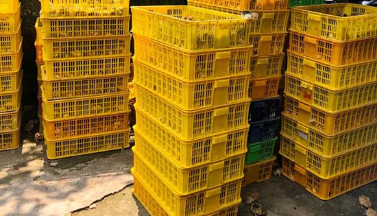 Bắt giữ lượng lớn gà giống nhập lậu từ Trung Quốc