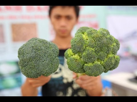 [Hình ảnh] Cách phân biệt rau củ Đà Lạt và Trung Quốc