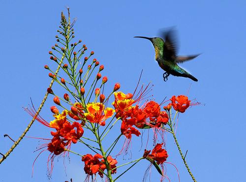 Thiên nhiên ở Caribbe lúc này rất tươi đẹp để chào đón du khách nước ngoài  Xem thêm tại: http://www.lamsao.com/top-nhung-tour-du-lich-the-gioi-co-gia-tren-troi-p214a92199.html