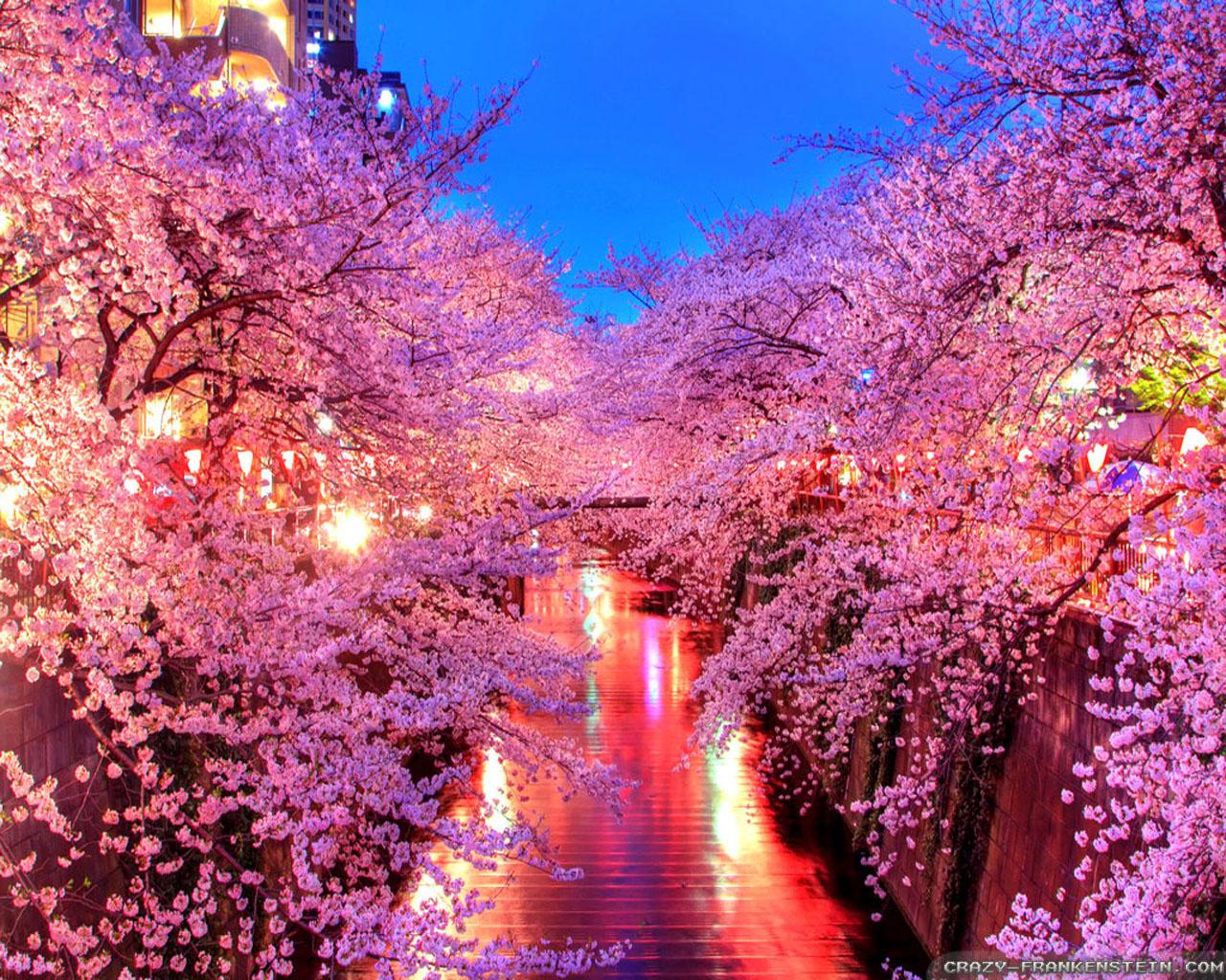 Nhật Bản đẹp nhất vào tháng 3,4 khi hoa Anh đào nở.