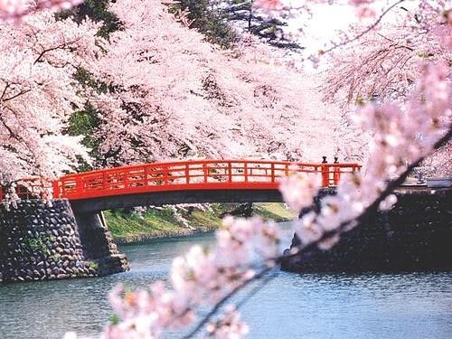 Du khách nên tránh du lịch Nhật Bản vào tháng 6 vì là mùa mưa.