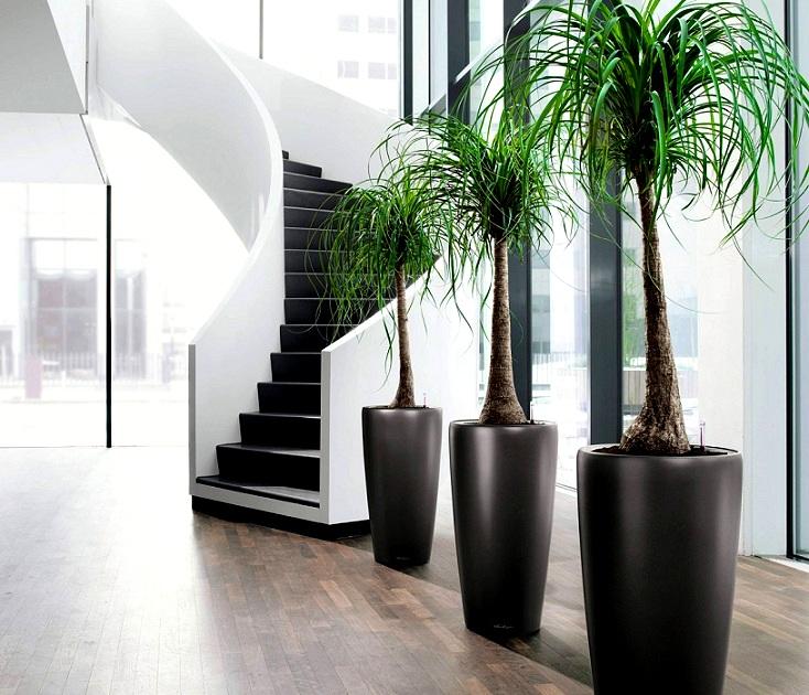 Vì sao trong nhà nên có cây xanh và nước?