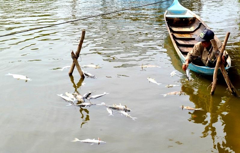 Ăn cá chết do chất độc ảnh hưởng như thế nào tới sức khoẻ?