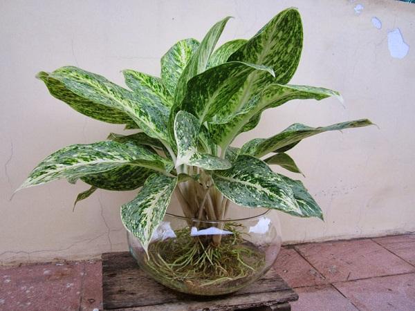 Người mệnh Thủy nên trồng cây phong thủy nào trong nhà?