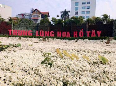 Chính quyền phường Nhật Tân bất lực để thung lũng hoa Hồ Tây hoạt động sai phép