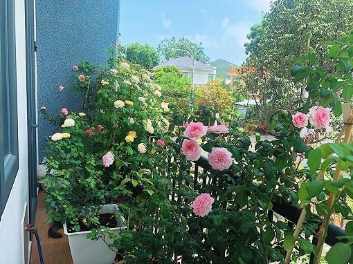 Nguyên tắc vàng khi trồng cây phong thủy ở ban công  vừa đẹp vừa hút tài lộc