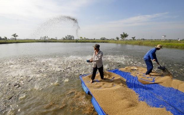 Cảnh báo và chiến lược phát triển từng thị trường thủy sản