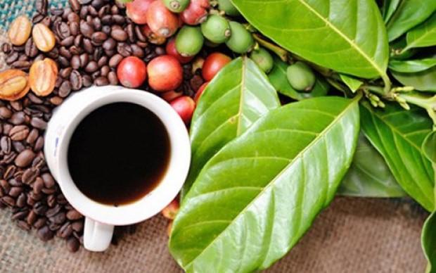 Giá cà phê hôm nay 4/12: Tiếp tục tăng nhẹ 100 đ/kg