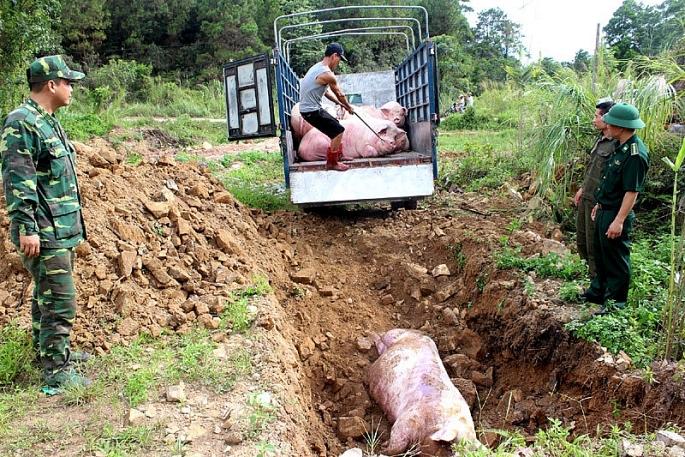 Giám sát chất lượng môi trường tại một số ô chôn lấp lợn bị bệnh dịch