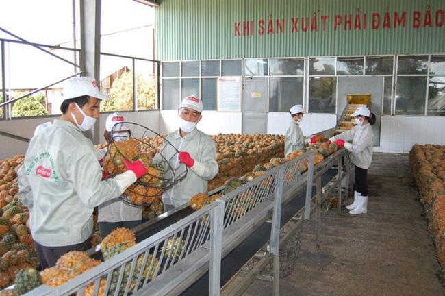 Nông sản Việt thích ứng tiêu chuẩn nhập khẩu chính ngạch của Trung Quốc