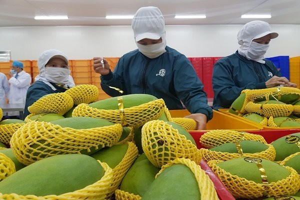 Thị trường xuất khẩu rau quả của Việt Nam đạt 2,82 tỷ USD trong 9 tháng