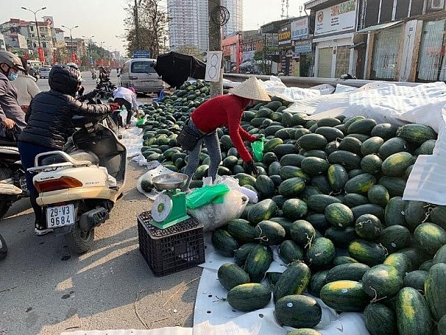 Nghiên cứu nguồn hàng rau quả để xuất khẩu