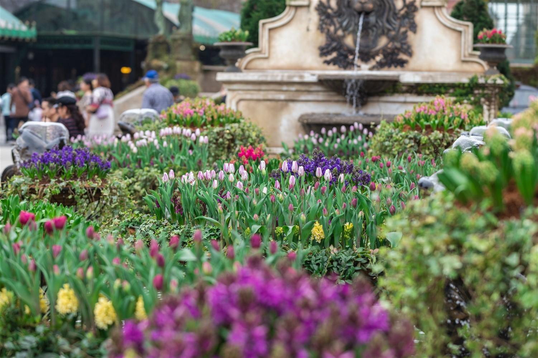 Rực rỡ sắc màu của 1,5 triệu bông tulip trên Bà Nà