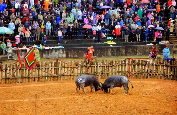 Bộ Văn hóa đề nghị tạm ngừng tổ chức Lễ hội Chọi trâu Phù Ninh năm 2020