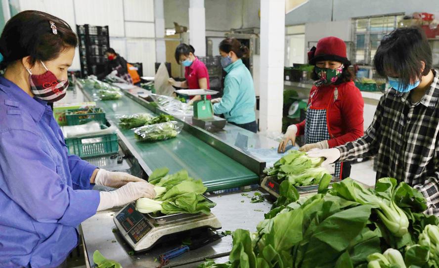 """Chuỗi liên kết sản xuất tiêu thụ nông sản: """"Chìa khóa"""" thúc đẩy tăng trưởng"""