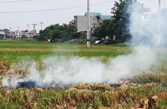 Hà Nội kiểm tra tình trạng đốt rơm rạ tại 20 huyện, thị xã