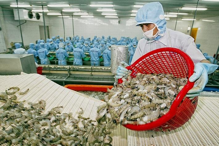 Dự báo xuất khẩu tôm tăng trưởng mạnh