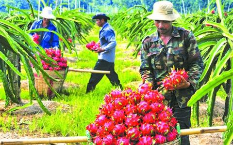 """Tồn dư """"hóa chất"""" - điểm nghẽn của nông sản Việt ở EVFTA?"""