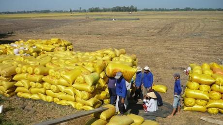 Xuất khẩu gạo tăng mạnh do được giá và nguồn cung nội địa lớn
