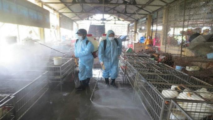 Giám sát chặt chẽ tình hình dịch cúm gia cầm tại cơ sở