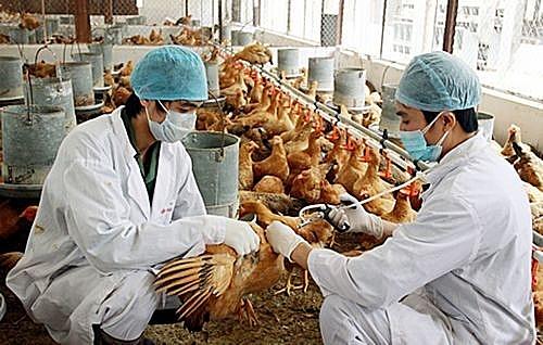 Tăng cường tuyên truyền phòng, chống dịch cúm A (H5N1)