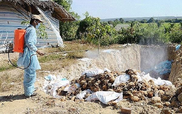 Trà Vinh: Tiêu hủy gần 1.000 con gia cầm nhiễm cúm A/H5N1