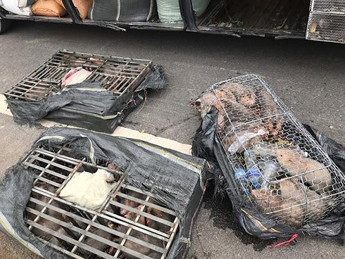 Bắt giữ 2 xe chở động vật và hàng trăm chai rượu ngoại không rõ nguồn gốc