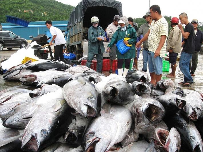 Xuất khẩu cá ngừ tăng trưởng trở lại