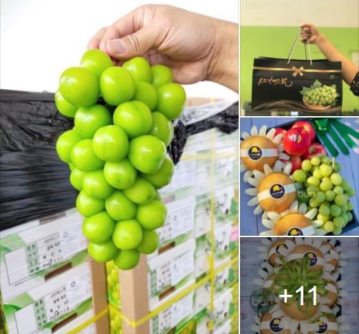 Siêu giảm giá cuối tuần từ các cửa hàng thực phẩm sạch