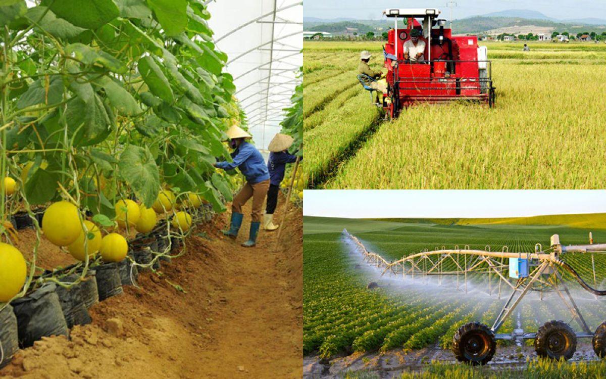 """Kiến tạo thị trường bất động sản nông nghiệp: Tháo """"nút thắt"""" tích tụ đất đai"""