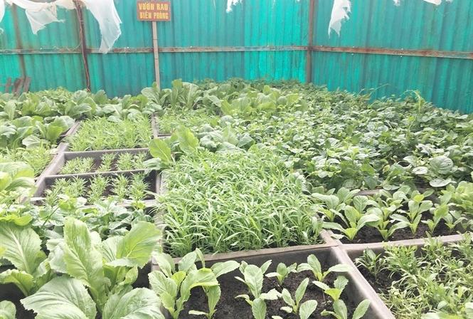 Nông nghiệp công nghệ cao trên đảo Trường Sa