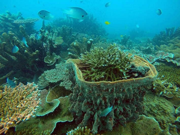 Sẽ tăng diện tích các khu bảo tồn biển, ven biển